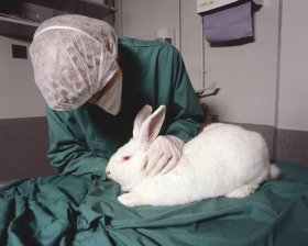 Lab Technician Checks Rabbit: UAE