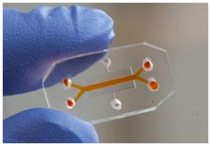 Organ on a chip