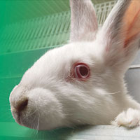 Animal Justice Project: Cures Not Cruelty Campaign