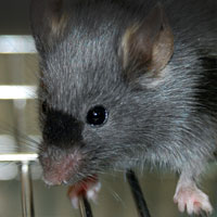 Animal Justice Project: Vivisection Campaign