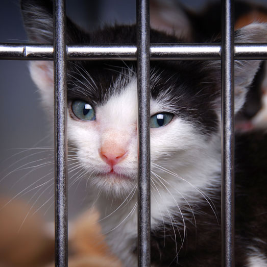 Campus Without Cruelty: Kitten