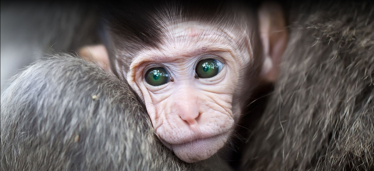 Animal Justice Project: Promoting veganism, ending vivisection