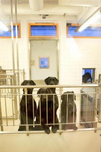 News - Animal Justice Project